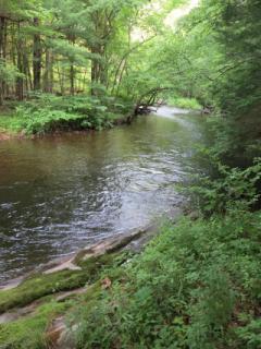 Farmington River - Butler Trail