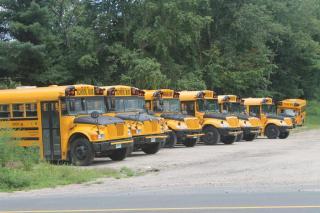 Row of School Busses