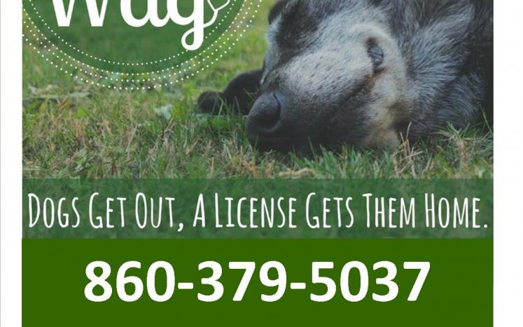"""Photo of dog with message Dogs get out - a license gets them home"""" and 860-379-5037."""